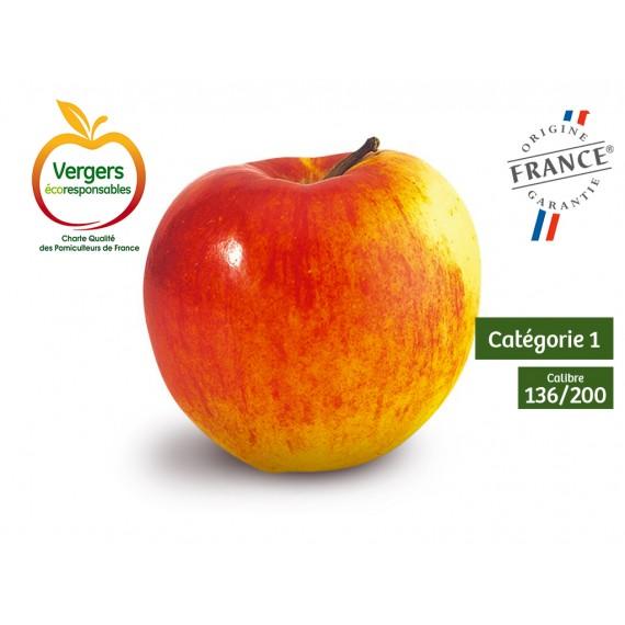 Pommes INITIAL